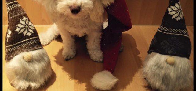 Der Nikolaus ist da…